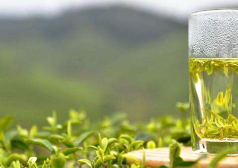 Какой зеленый чай выбрать?