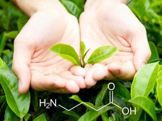 GABA чай – уникальный органический источник здоровья